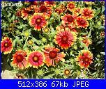 Regalo semi piante da fiore per i vostri giardini!!!-gaillarda-jpg