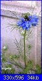 Regalo semi piante da fiore per i vostri giardini!!!-nigella-jpg