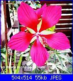 Regalo semi piante da fiore per i vostri giardini!!!-un-ibisco-particolare-jpg