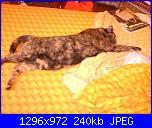 groups/passione-gatto/pictures/323266-la-nanna-di-cannella-ovvero-come-occupare-quasi-tutto-il-letto-naturalmente-il-mio.jpg