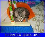 groups/passione-gatto/pictures/323734-24giugno2013-5.JPG