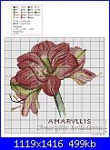 groups/schemi/pictures/163122-amaryllis-belladonna.jpg
