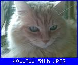 members/bibbina/albums/birba-e-suoi-parenti/151137-la-dolcissima-birba.jpg