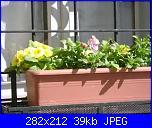 members/casamiacasamia/albums/il-mio-giardino/164639-fioriera-viole-primule.JPG