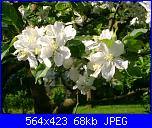 members/casamiacasamia/albums/il-mio-giardino/169638-fiori-di-melo.JPG