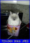 la mia gatta Cristal