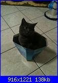 Il mio gatto Dexter