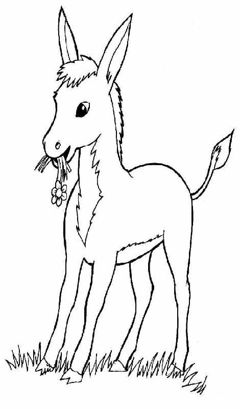 I disegni per bambini asino by for Immagini di animali marini da stampare