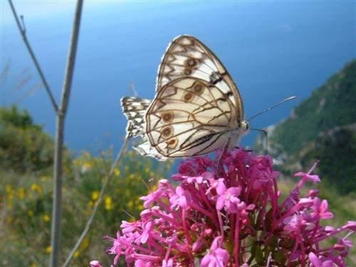 Cartoline virtuali farfalle - Immagini di farfalle a colori ...
