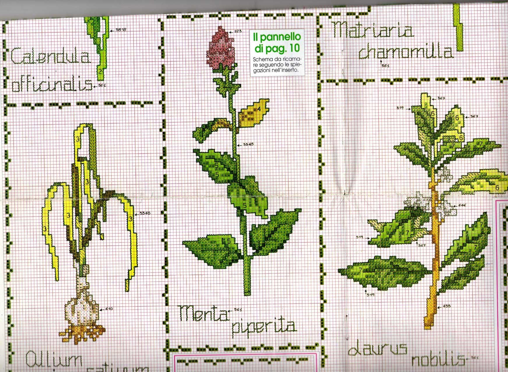 Piante Aromatiche Perenni Elenco : Elenco piante aromatiche blackhairstylecuts
