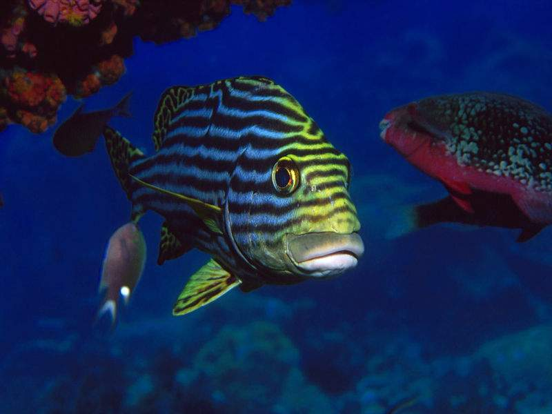Sfondo pesci tropicali 2614 for Sfondi animati pesci