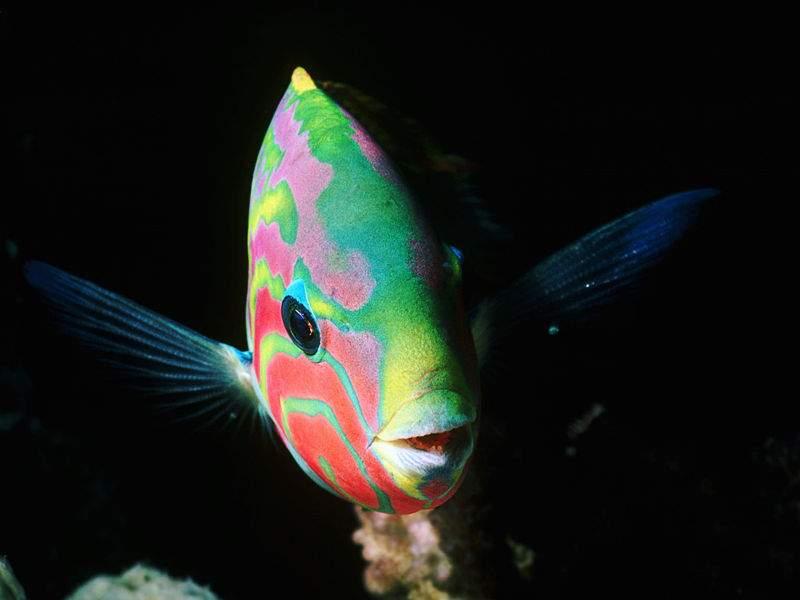 Sfondo pesci tropicali 2625 for Sfondi animati pesci