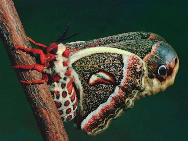 Rettili insetti 2888